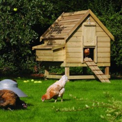 Large Chicken Coop - Natural Timber - 1580 x 1540 x 1230mm